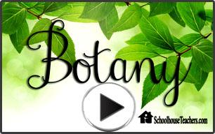 Botany video